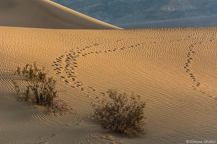 Fotografia di paesaggi con duna di sabbia illuminata all'alba