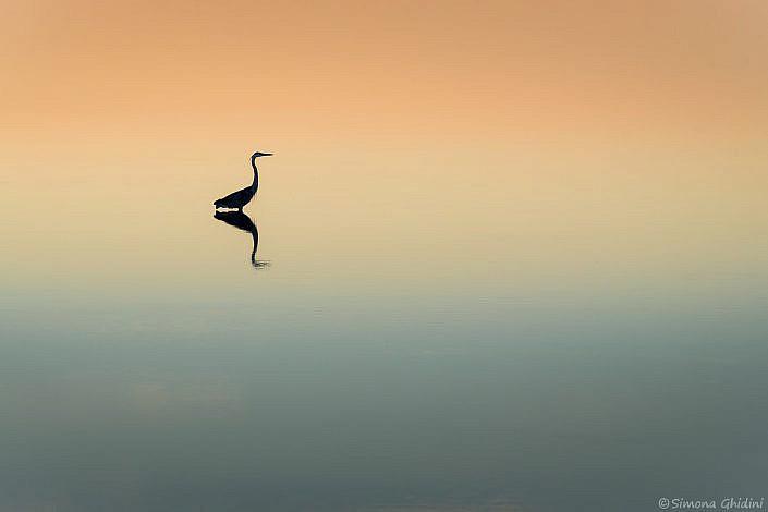 Fotografia di animali con un airone in silhouette che si riflette nell'acqua tra i colori del tramonto